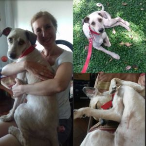 Adopciones Mascotas Puerto Madero