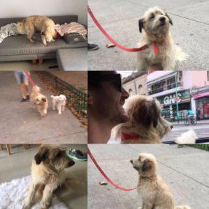 mascotas puerto madero / perros en adopción
