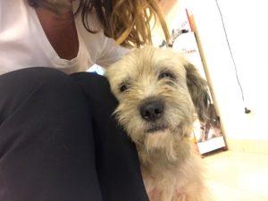 mascotas puerto madero perros en adopcion