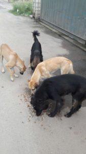 Mascotas Puerto Madero