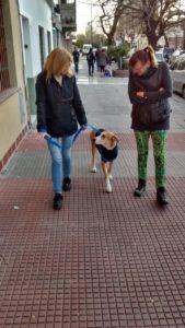 mascotas puerto madero adopciones