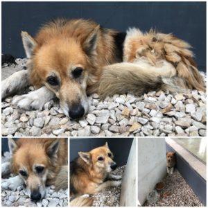 mascotas puerto madero adoptar perros