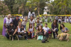 adopción de perros adultos